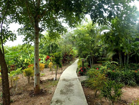 Bueng Pai Farm: Path in the grounds