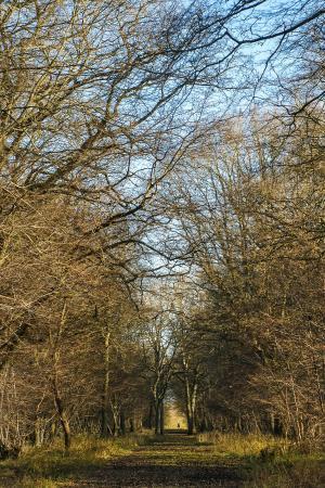 Hatfield Forest Nature Reserve: woodland walk