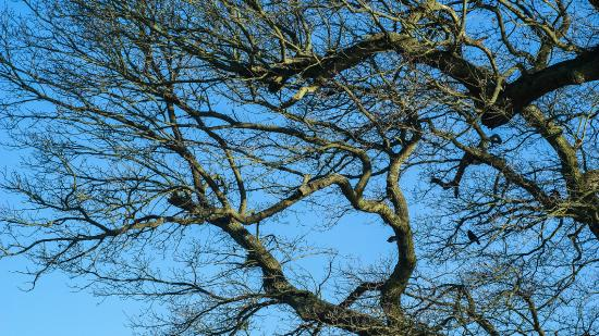 Hatfield Forest Nature Reserve: oak tree and wild life