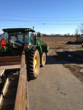 Brooksby Farm, Cut-your-own Christmas tree, tree in tractor bucket ...