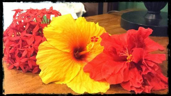 D'Nest Inn: lovely flowers from the garden