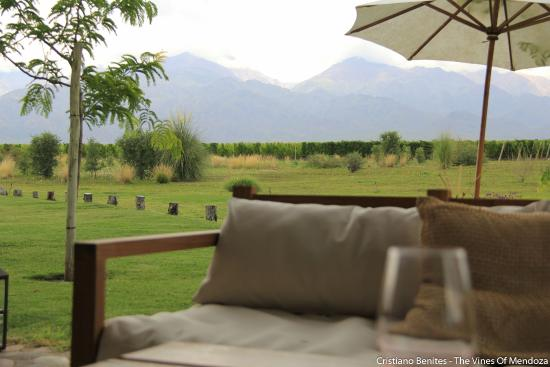 Red Globe Tours : Visita aThe Vines Of Mendoza