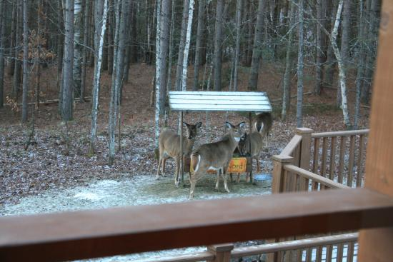 Escale du Nord : Enjoying breakfast with the deer