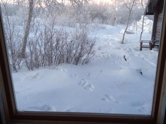 Moose tracks outside