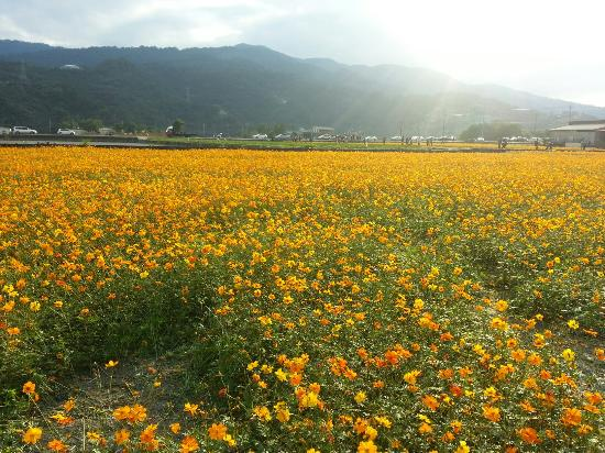 San Sing Flower Sea