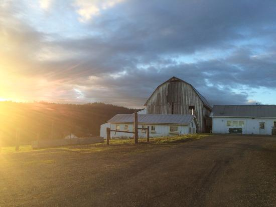 Gaston, OR: Beautiful old barn right outside the tasting room.