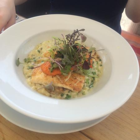 The Apple Shed Cafe & Bar: Turbot with risotto
