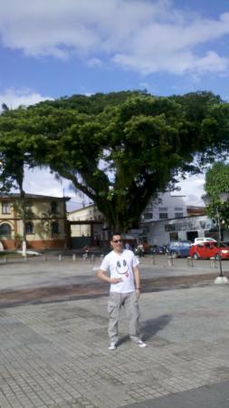 Catedral Nuestra Senora de Lourdes: Ceiba junto a la Catedral