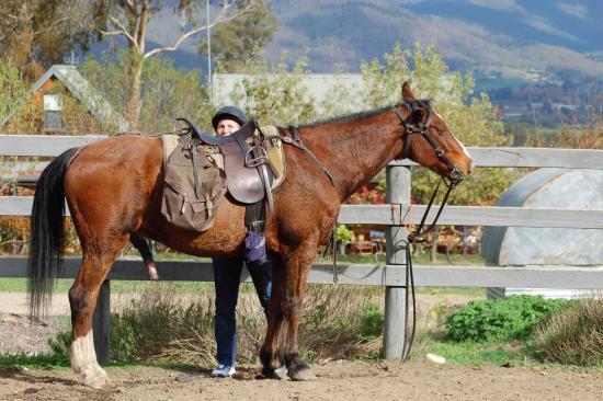 Bogong Horseback Adventures: Saddle up