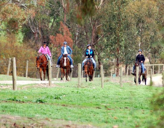 Bogong Horseback Adventures: Ride back