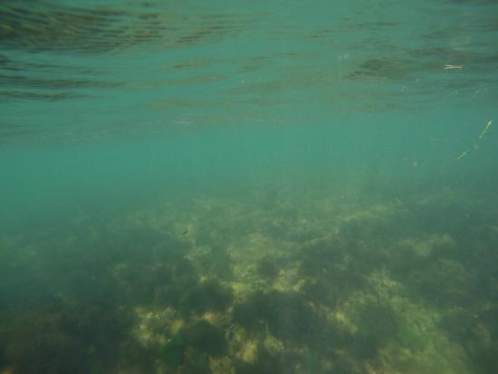 Snorkeling Picture Of Coconut Bay Beach Resort Spa Vieux Fort