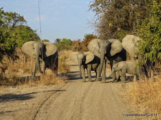 Nsolo Bush Camp - Norman Carr Safaris: Roadblock