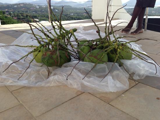 Cap Estate, เซนต์ลูเซีย: Fresh Coconuts from the Garden