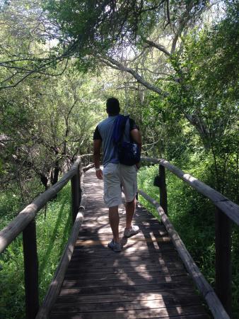 Rhino Post Safari Lodge : ponte para os quartos