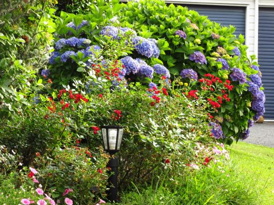 Mokoia Downs Estate B&B: More Flowers