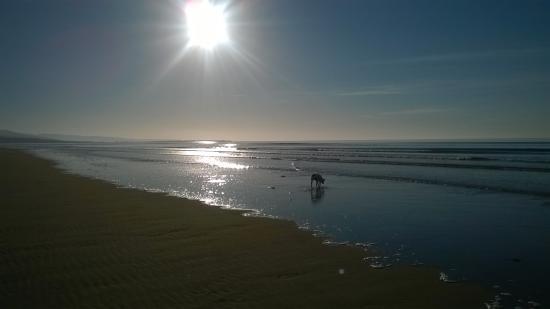 The Grapes Hotel: A Happy Dog on Harlech Beach!