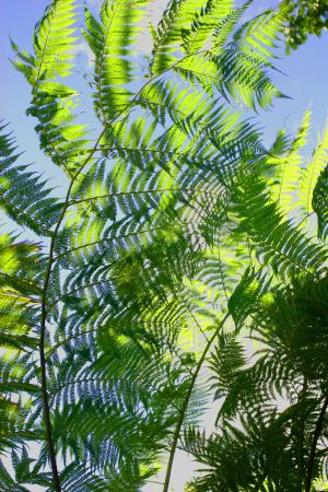 Rainforest Inn: Looking up for 2015 from the Rain Forest Inn in Puerto Rico!  Our perspective is now rebalanced!