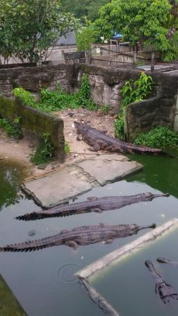 Teritip Crocodile Farm
