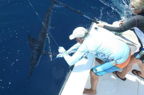 Nosara Paradise Rentals: Marlin