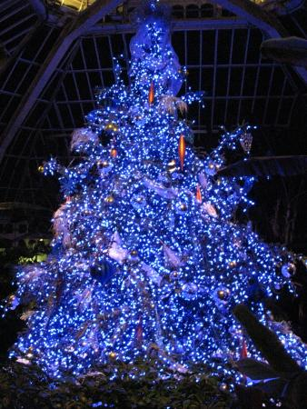 phipps conservatory and botanical gardens beautiful blue tree