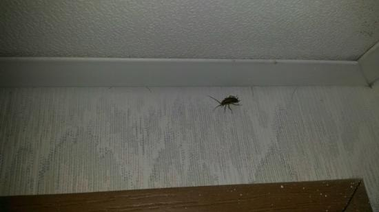 Eureka Holiday Hotel: One of the roaches in the bathroom