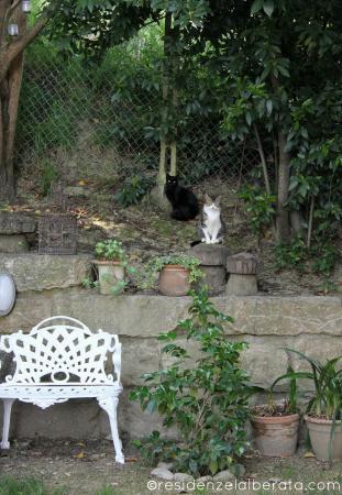 Residenze L'Alberata: Il giardino