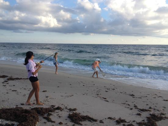 Seashell Suites Resort : shark fishing off the beach