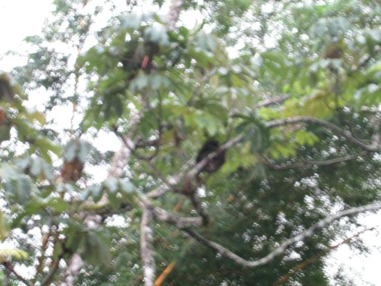 The Lotus Garden: Sloth in tree in their courtyard