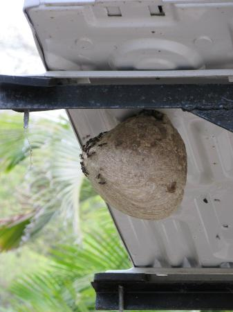 Villas Sol Hotel & Beach Resort: Active wasp nest next to mini patio