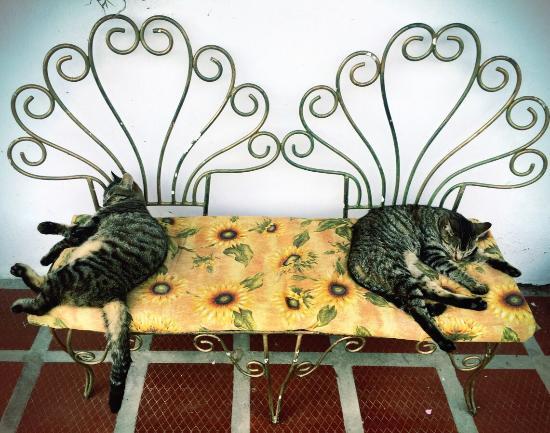 Hostal Casa del Loro : Los gatos