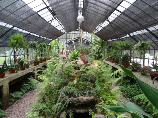 Estufa - Picture of Jardin Botanico, Buenos Aires - TripAdvisor