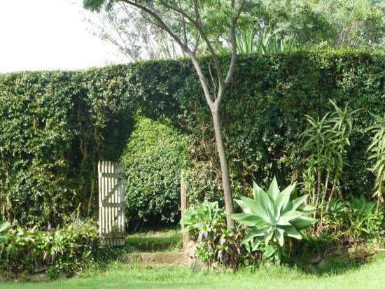 Kembu Cottages : Garden