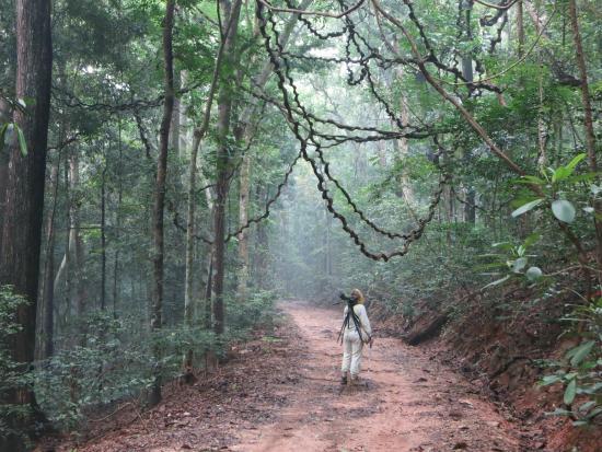 Udawattekele Sanctuary: Vines in Udawattakele
