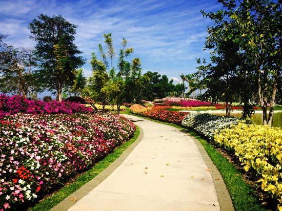 Flower Gardens Picture Of Jardines De Mexico Jojutla Tripadvisor