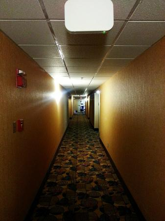 Comfort Suites Downtown Buffalo: Hallway