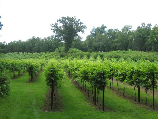 Warwick, NY: Clearview Vineyard 2014