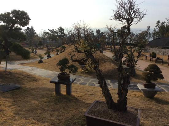 Sinan-gun, Νότια Κορέα: Bonsai Trees