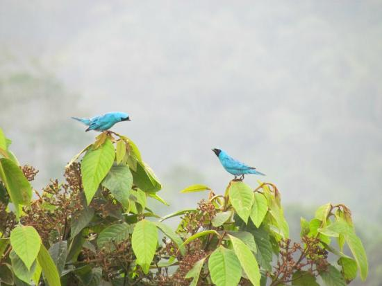 Hacienda San Vicente: Two birds having a chat