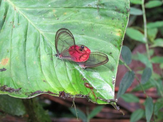 Hacienda San Vicente: butterflies