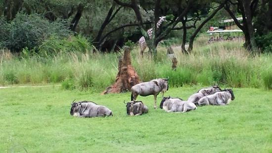 Disney Animal Kingdom Safari Tour Reviews