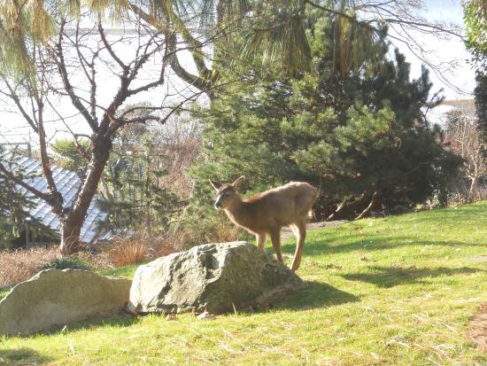 Filberg Heritage Lodge & Park: Photogenic deer