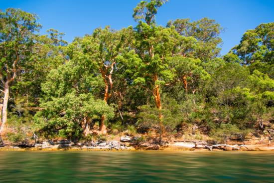 Cronulla & National Park Ferry Cruises: One of the beautiful spots on The Hacking River