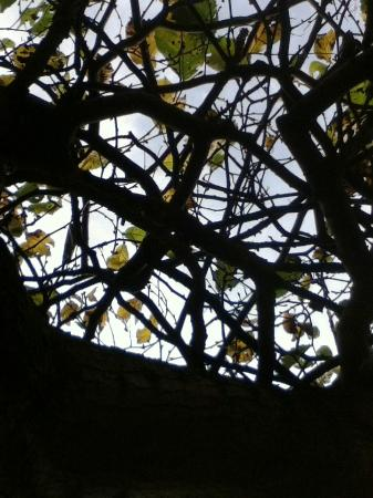 Barrie, Canadá: Looking Up through Branches