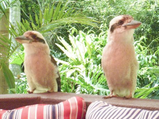 Songbirds in the Forest - Rainforest Retreat : visitors