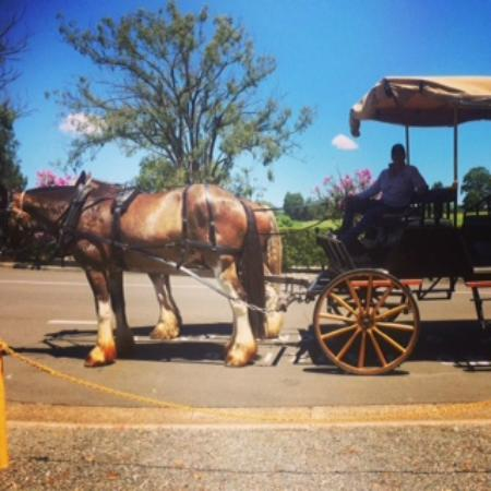 Hunter Valley Classic Carriages: The best way to travel around the Hunter Valley