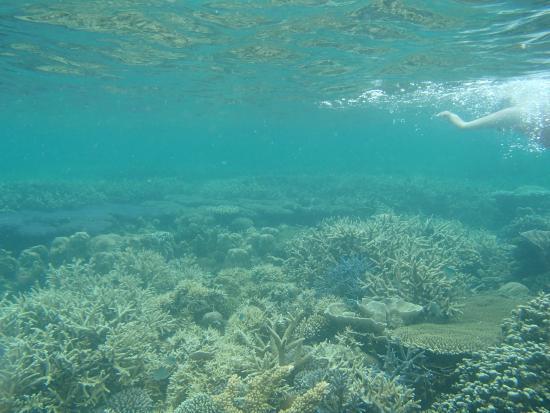 Siete Pecados: corals