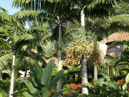 Palm Garden Resort: De prachtige tuin van de Palm Garden