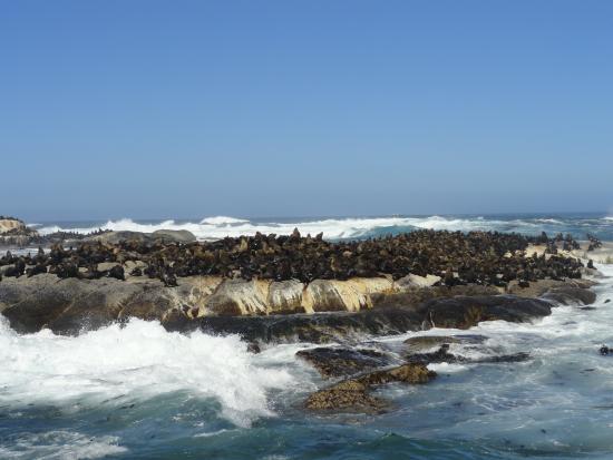 C.Tours - Day Tours: Seal island