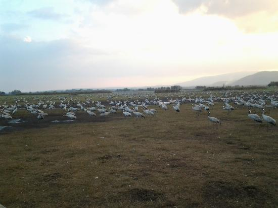 Israel Private Tours: Cool Bird Watching