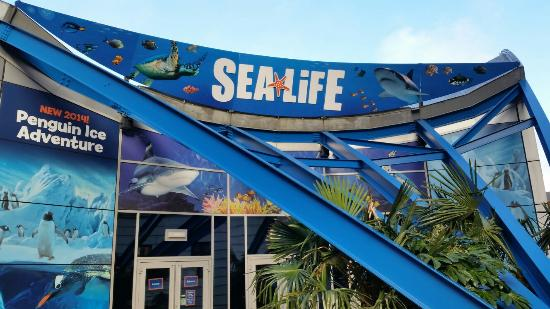 Sealife centre Birmingham - Picture of National Sea Life Centre ...